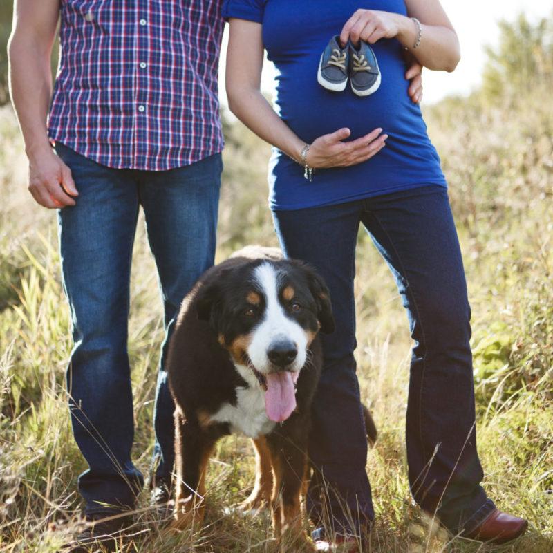 Fall maternity photos with dog. Séance maternité avec chien automne
