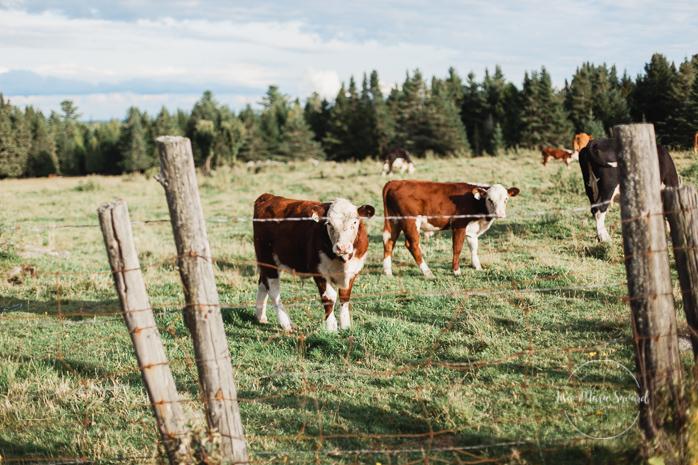 Outdoor rustic DIY wedding hay bales lace floral arch cows in field. Mariage champêtre extérieur rustique chic DIY hôtel Georgesville Saint-Georges de Beauce  Lisa-Marie Savard Photographie  Montréal, Québec  www.lisamariesavard.com