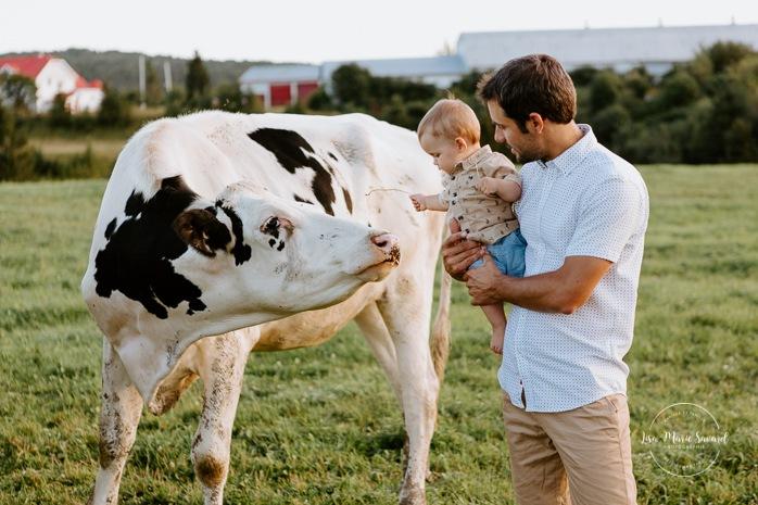 Little boy petting cow. Dairy farm photos with cows. Farm photo session. Family photos with cows. Countryside family photos. Photos de famille à la campagne. Photos de famille dans un champ. Photographe de famille à Montréal. Montreal family photographer.