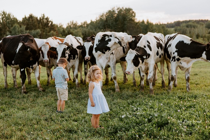 Boy and girl petting cows. Siblings petting cows. Dairy farm photos with cows. Farm photo session. Family photos with cows. Countryside family photos. Photos de famille à la campagne. Photos de famille dans un champ. Photographe de famille à Montréal. Montreal family photographer.