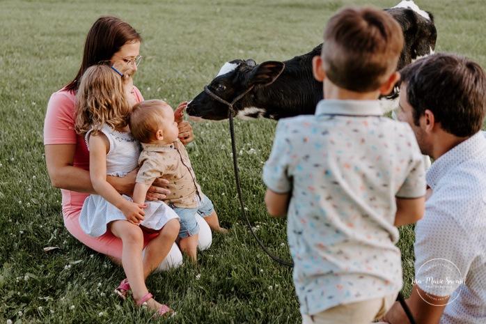 Baby boy petting cow calf. Dairy farm photos with cows. Farm photo session. Family photos with cows. Countryside family photos. Photos de famille à la campagne. Photos de famille dans un champ. Photographe de famille à Montréal. Montreal family photographer.