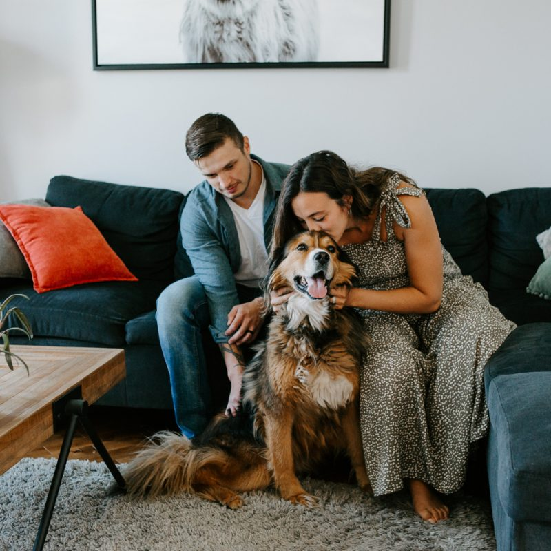 In-home maternity photos with a dog. Lifestyle maternity session. Maternity photos with large dog. Photos de maternité avec chien. Maternity photos dog. Photographe Saguenay. Saguenay photographer